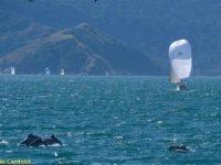 golfinhos na semana de vela - boat shopping