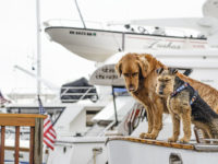 Animais-a-bordo-boatshopping