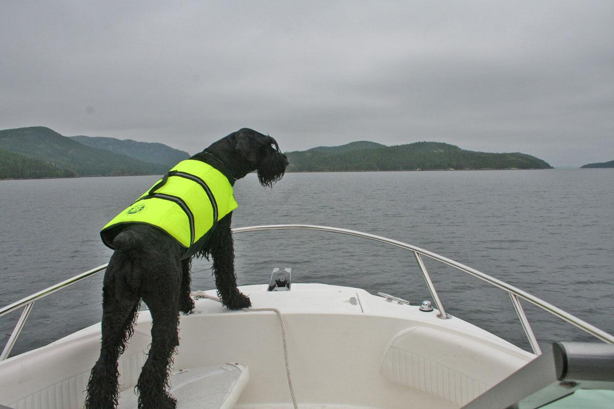 Animais-a-bordo-boatshopping