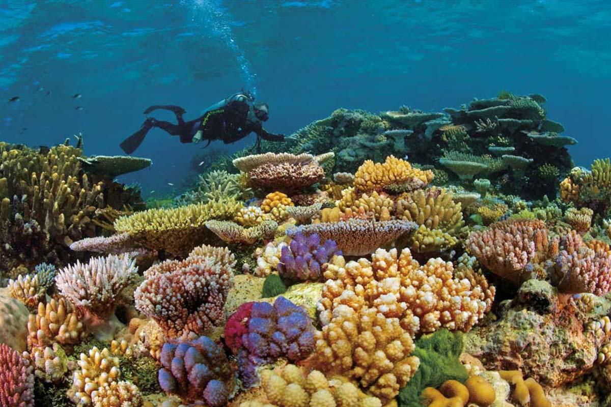Barreira-de-corais-australiana-boatshopping