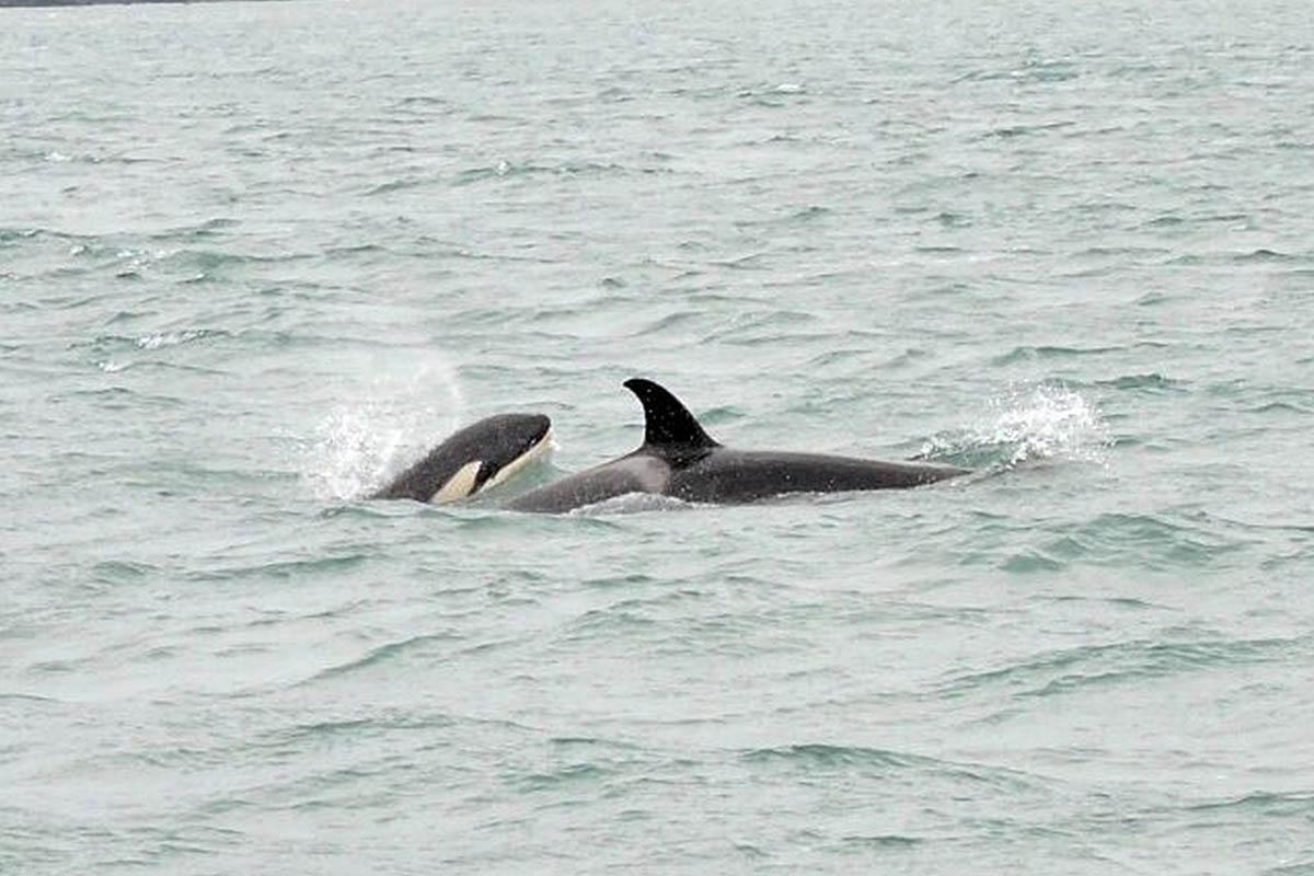 orcas na ilhabela - boat shopping