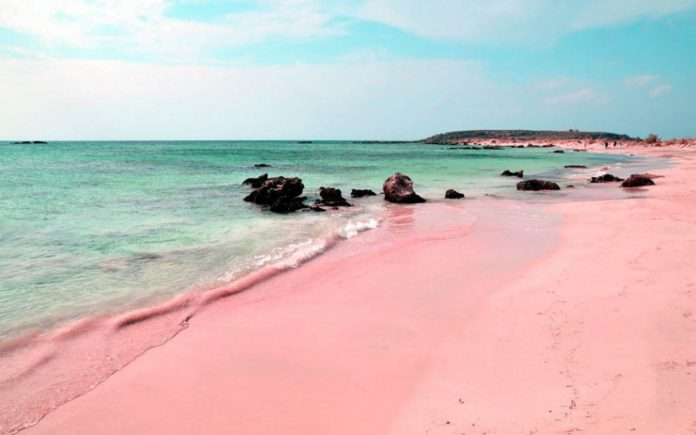 Bahamas Pink Sand Beach - boat shopping