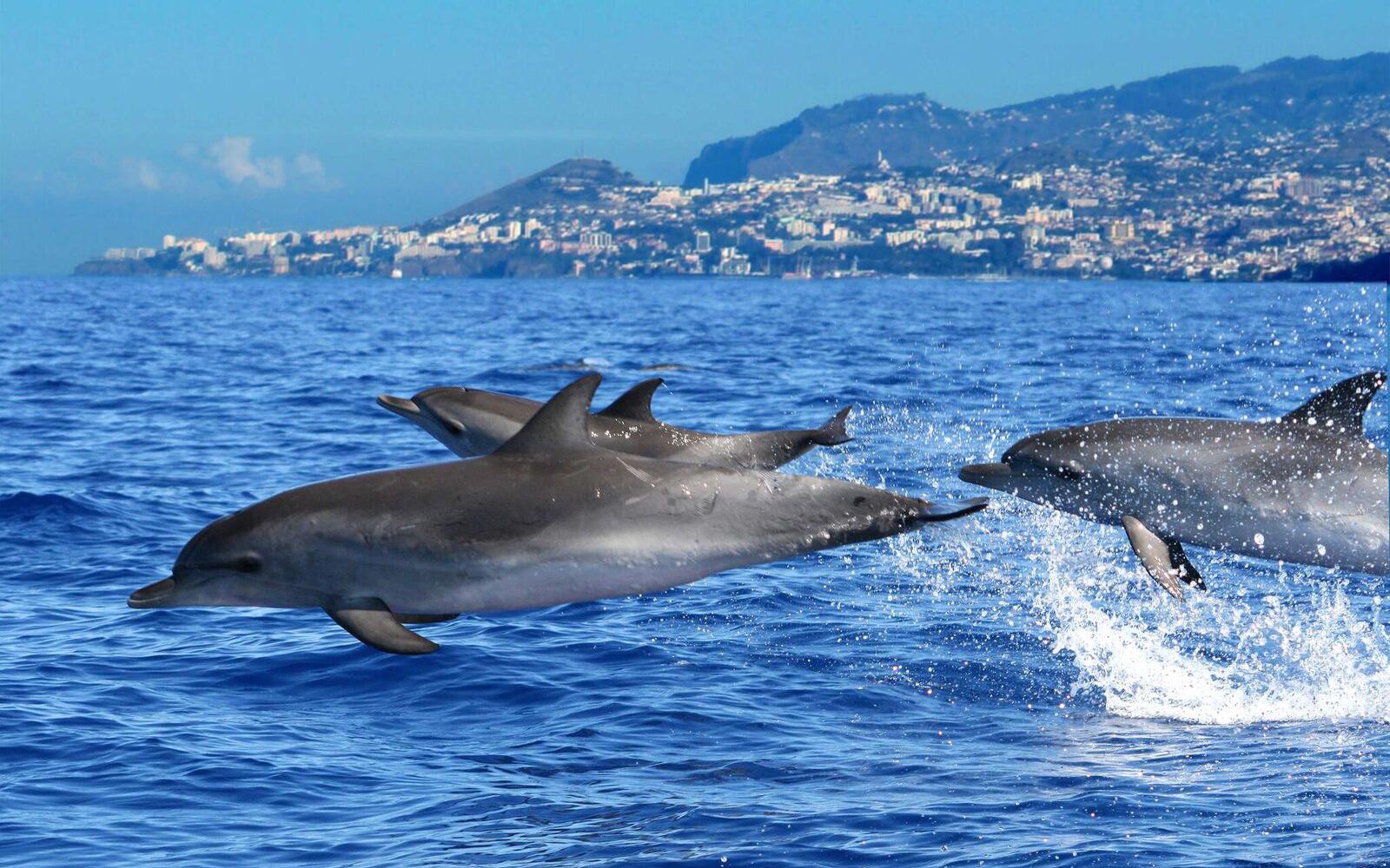Ilha da Madeira 5 - Boat Shopping